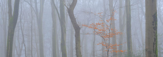 EFIAP Misty Forest