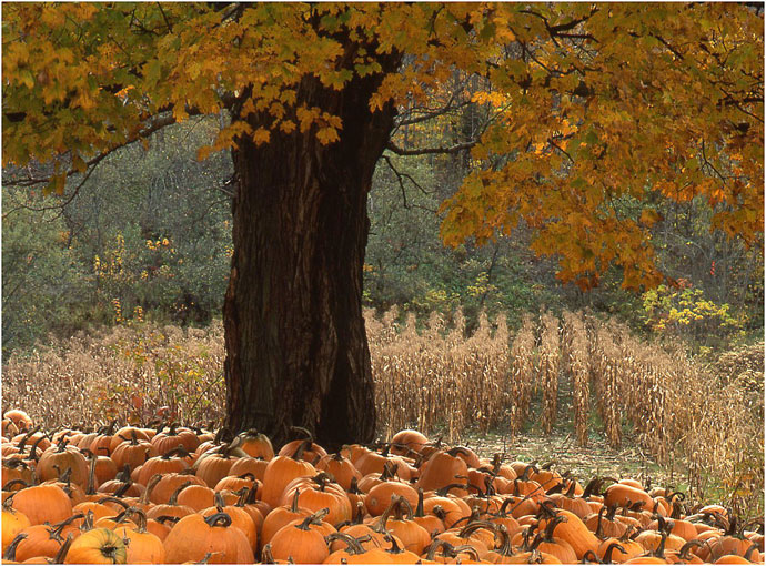 EFIAP Pumpkin Harvest
