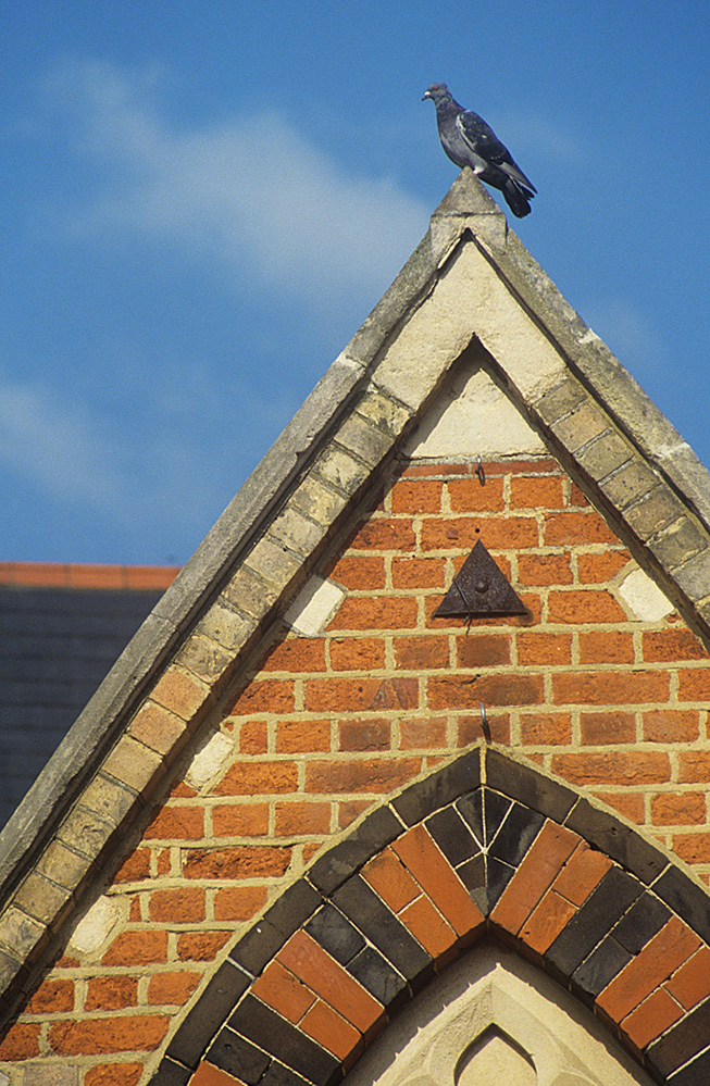 Pigeon on the Town Hall, Wokingham