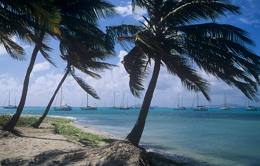 St Vincent and the Grenadines Palm Trees, Tobago Cays