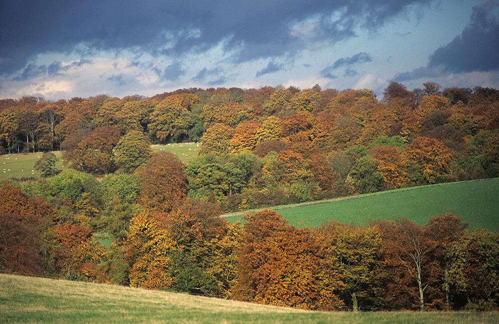 Autumn Landscape, near Upper Slaughter