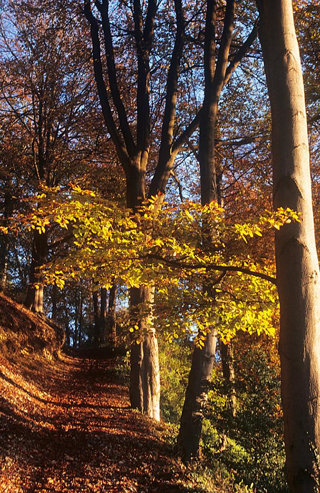 Autumn Trees, Birdlip Hill