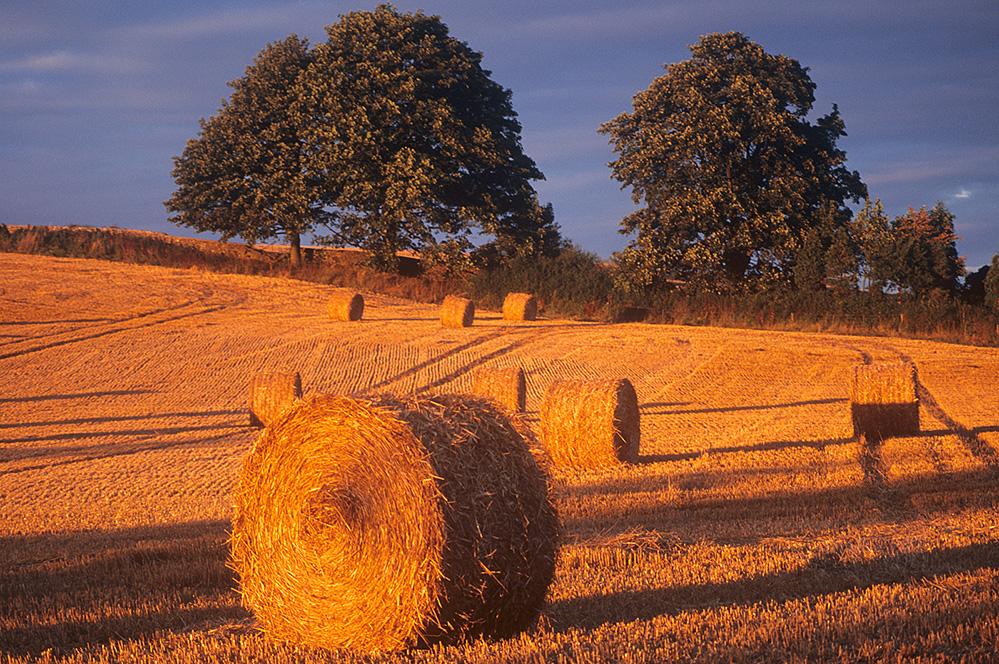 Hay Bale Field, near Birdlip