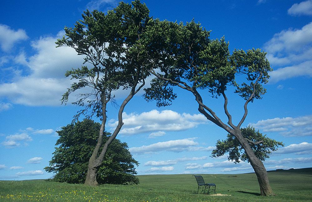Trees on Cleeve Hill, near Cheltenham