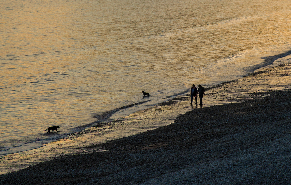 Dogwalkers on the Shore Sidmouth