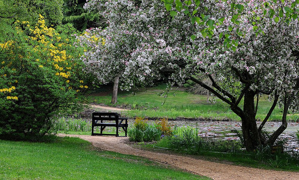 Furzey Gardens New Forest Bench and Blossom