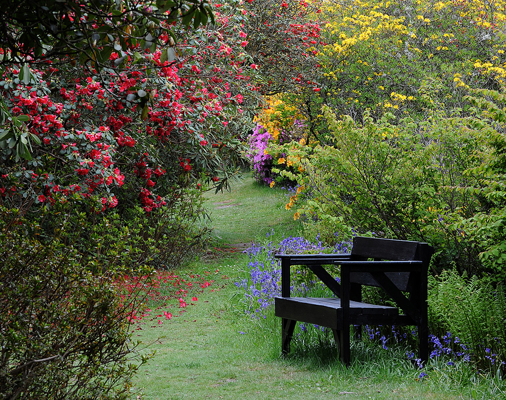 Furzey Gardens New Forest Bench and Spring Colour