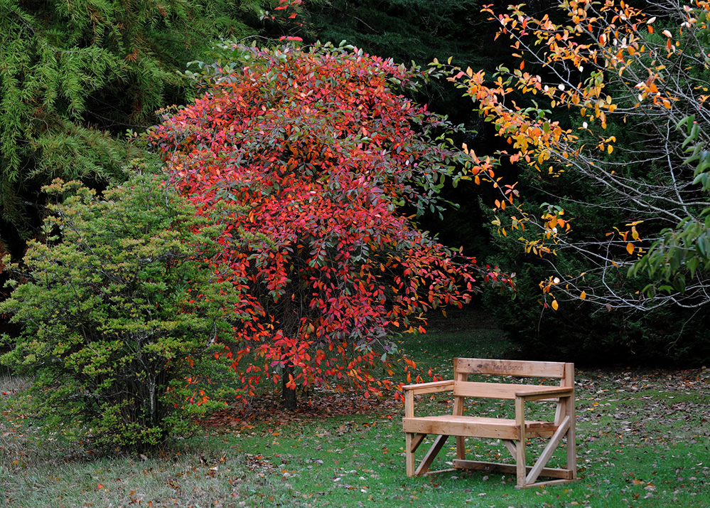 Furzey Gardens New Forest Ken's Bench in Autumn