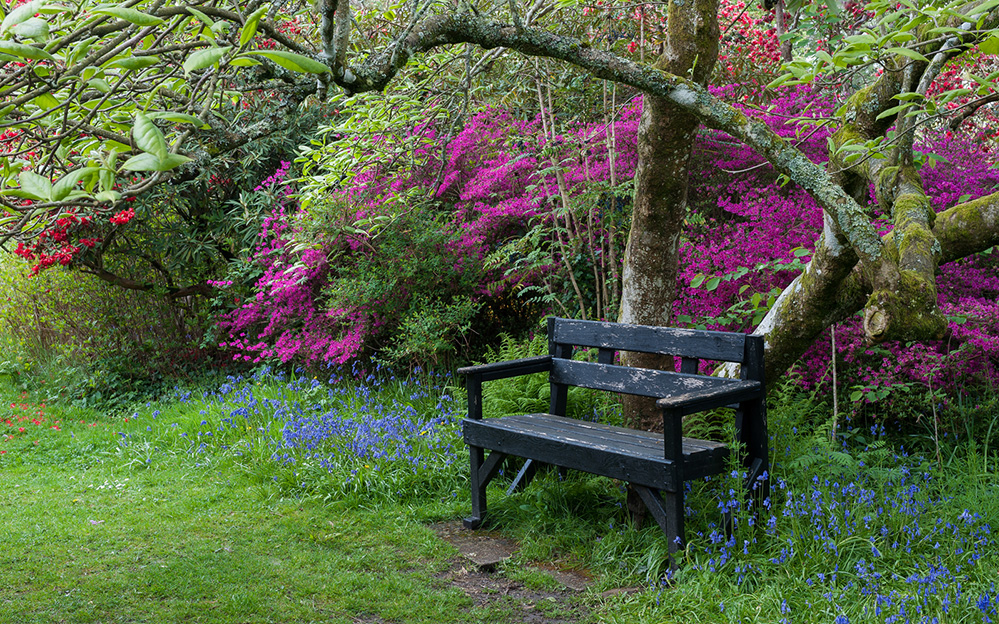Furzey Gardens New Forest Spring Bench 1