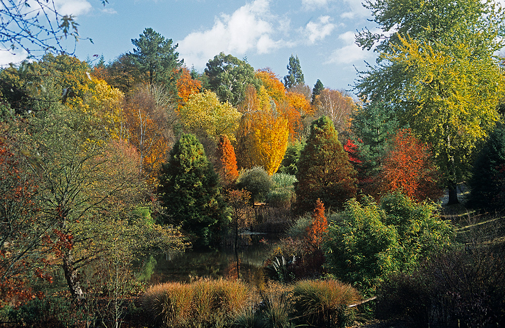 Sir Harold Hillier Gardens Romsey Autumn View across the Pond