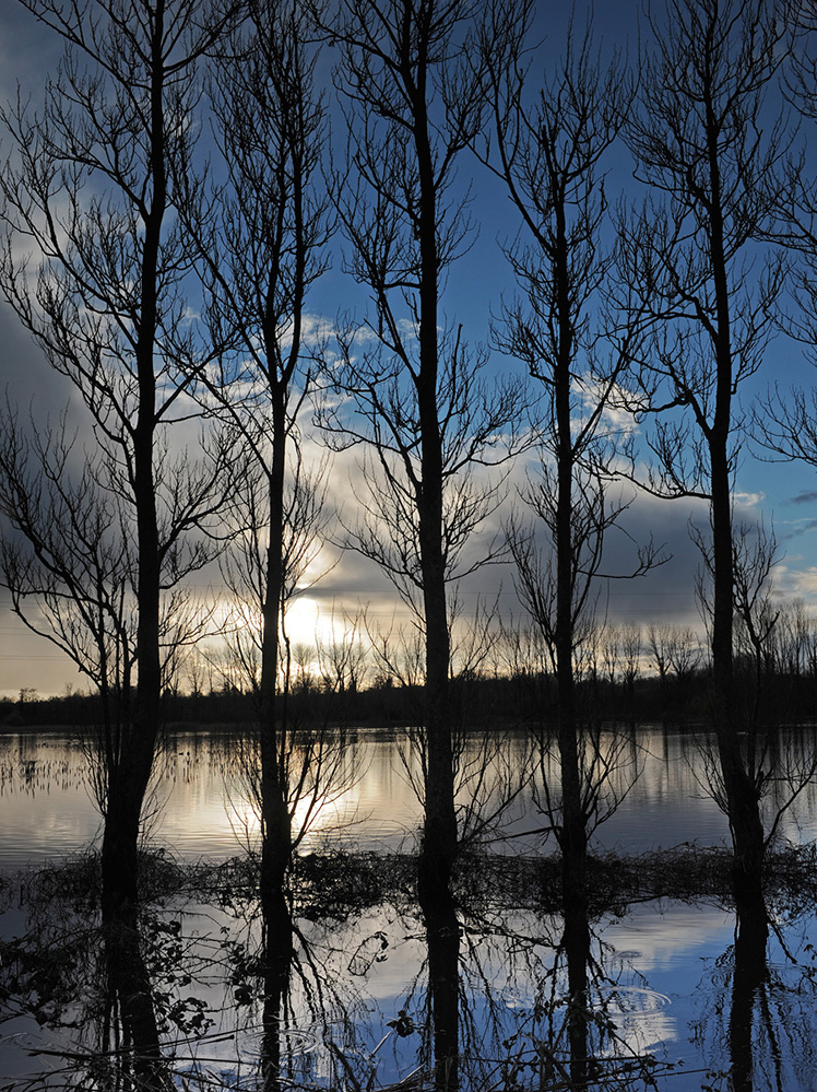 Five Trees, River Test , Romsey