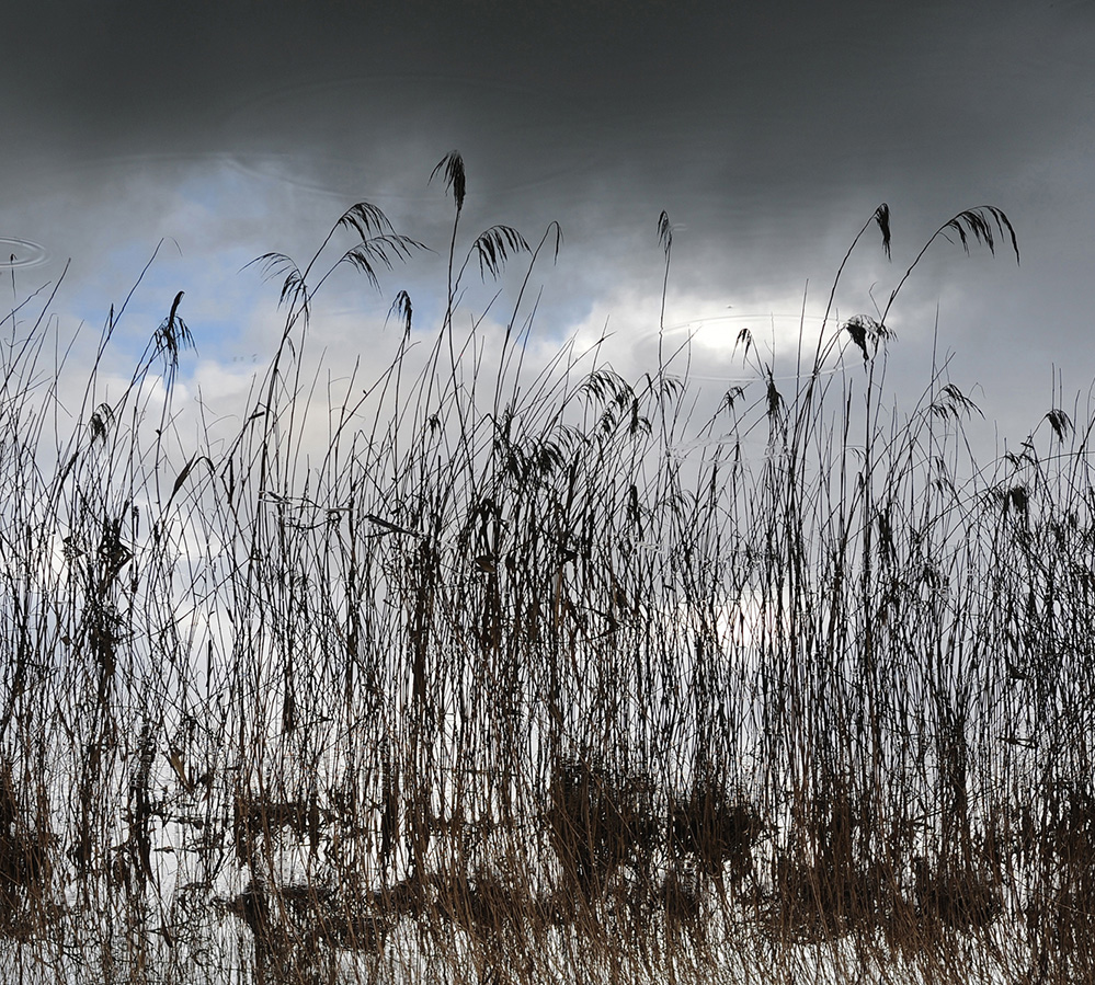 Grasses, River Test, Romsey