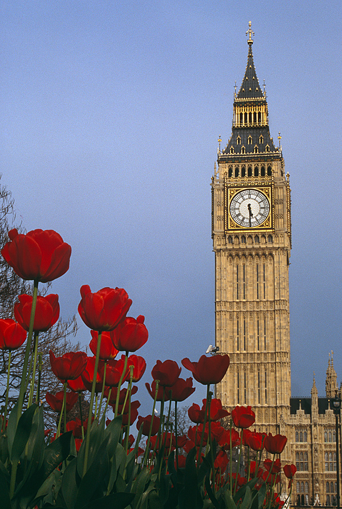 Big Ben and Tulips