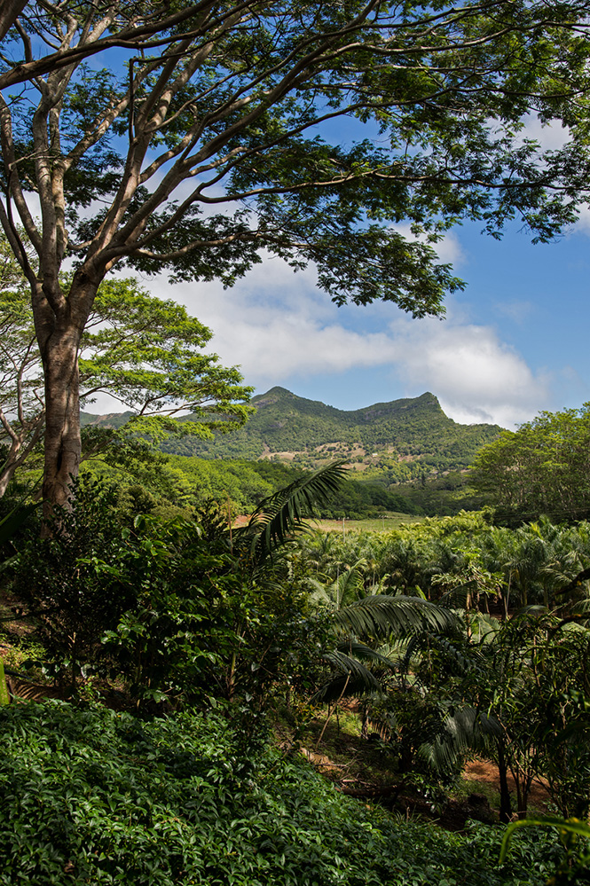 Verdant View at Chamarel 1