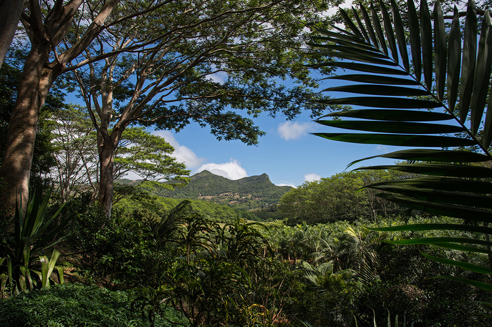 Verdant View at Chamarel 2