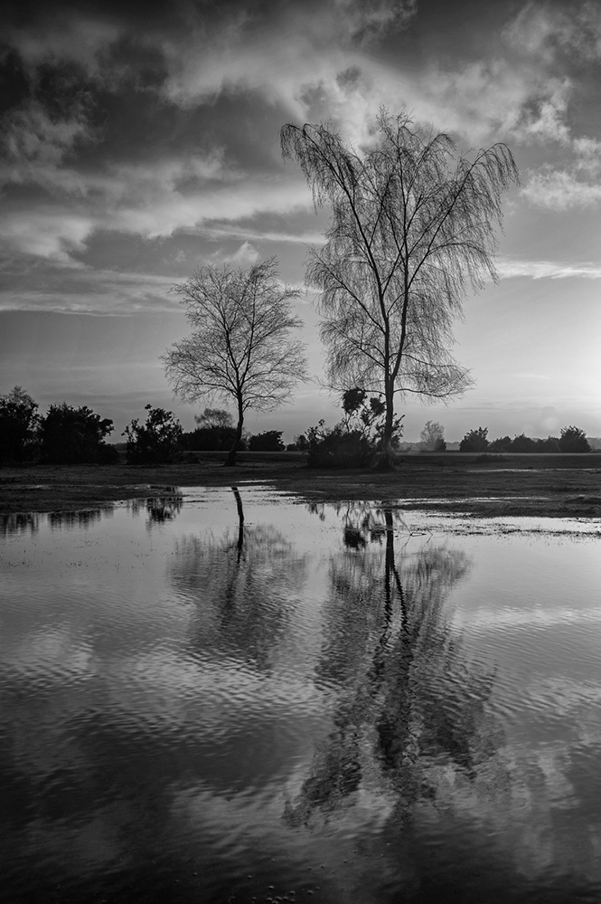 Late Afternoon Reflection, Pipers Wait, New Forest