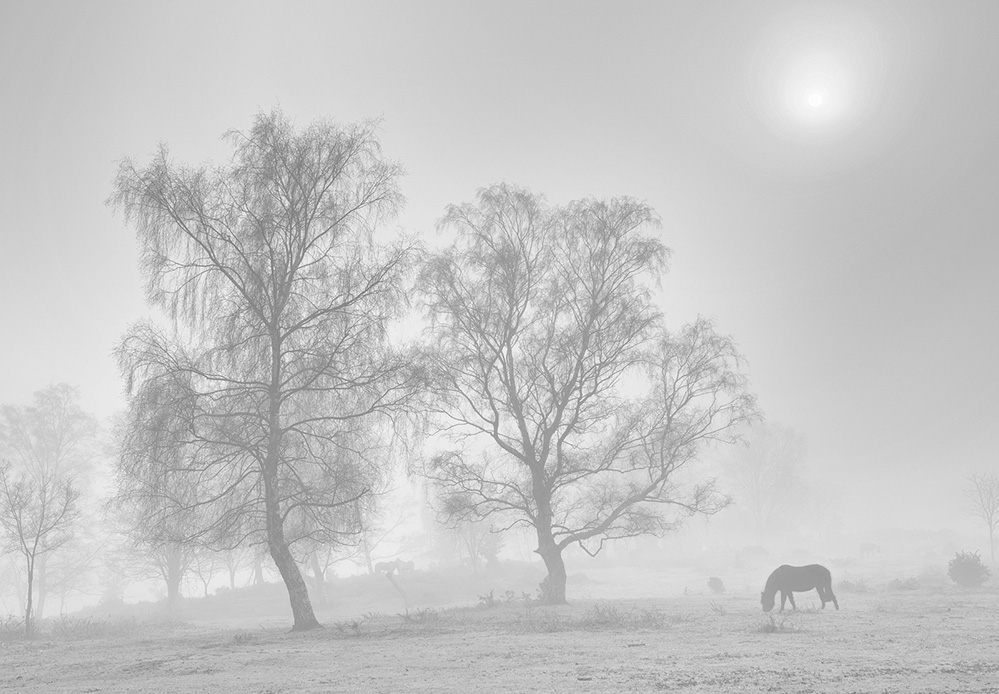 Misty Day, Furzley Common, New Forest