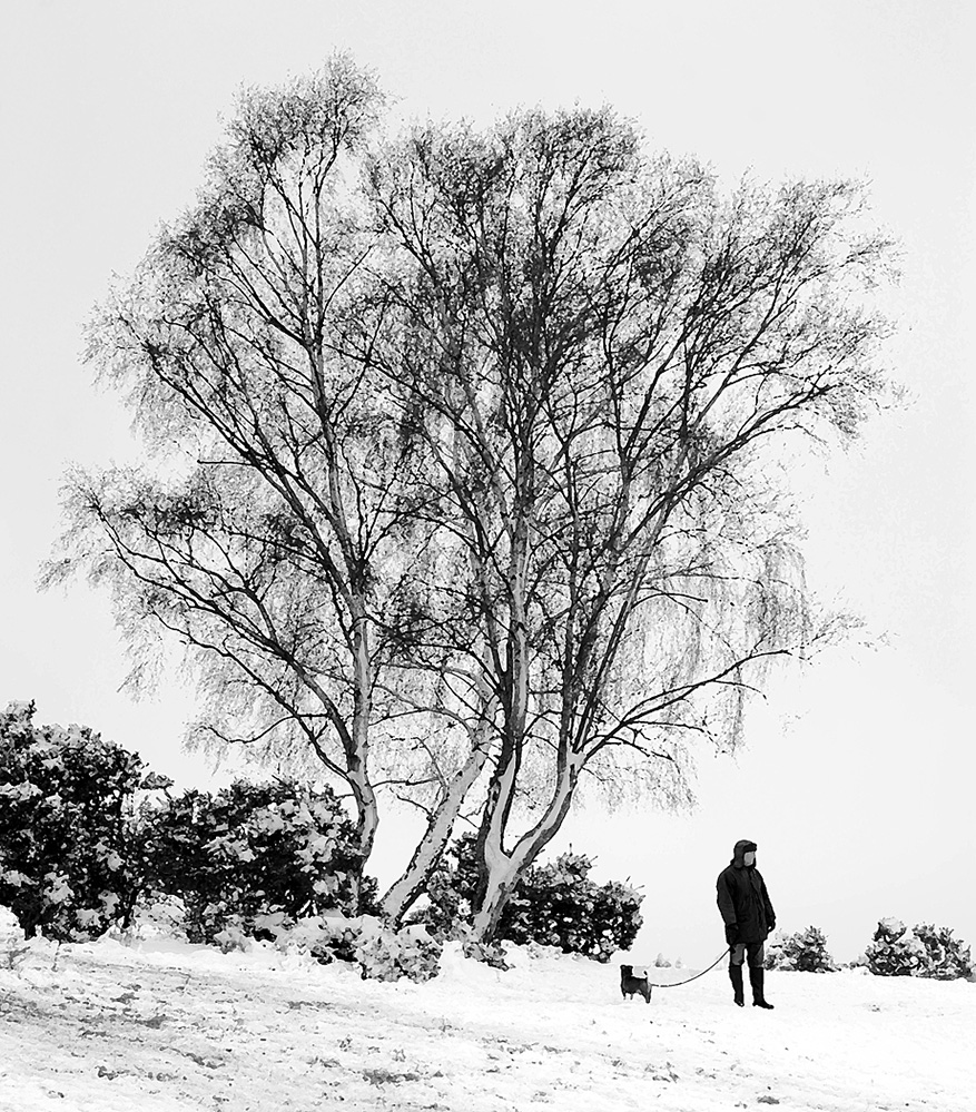 One Man and his Dog, Furzley Common, New Forest