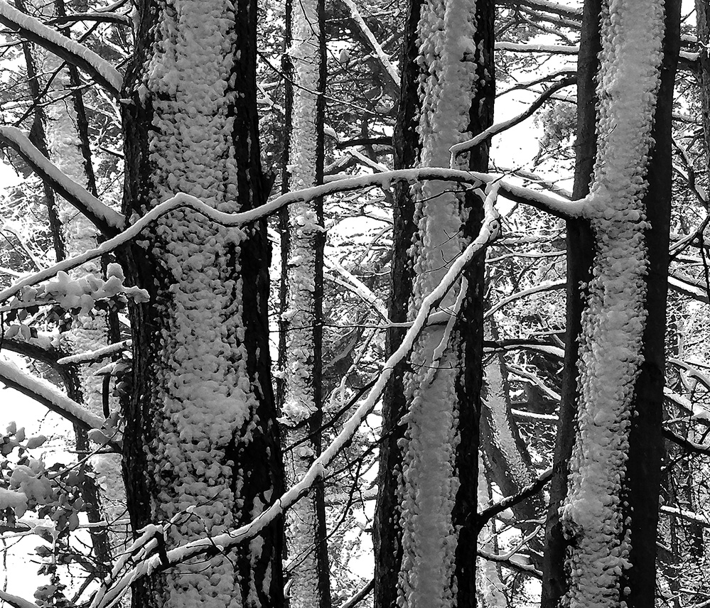Snow Branches, Landford, New Forest