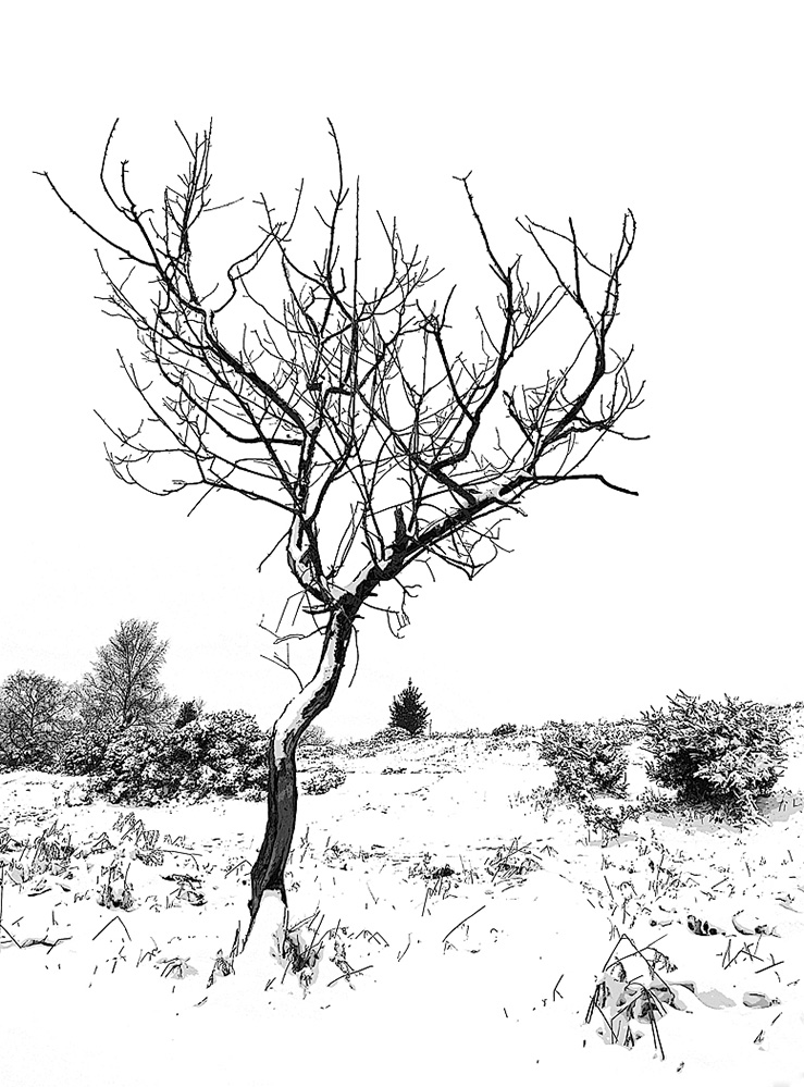 Winter Tree, Furzley Common, New Forest