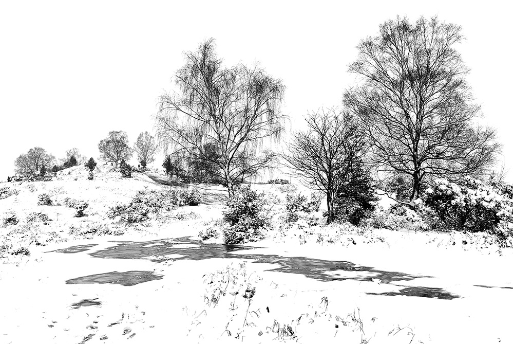 Winter Trees, Furzley Common, New Forest 1