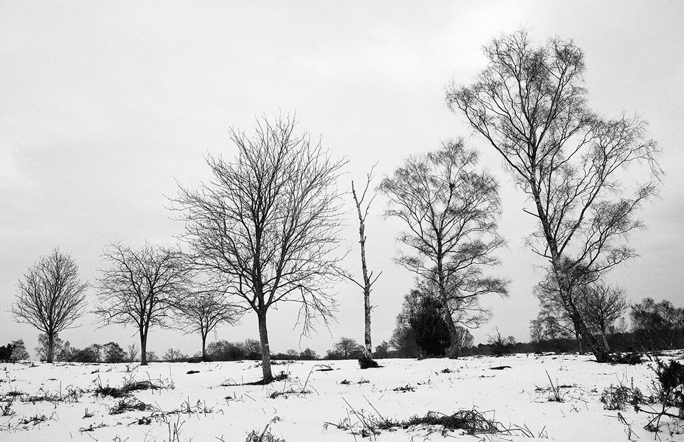 Winter Trees, Furzley Common, New Forest 2