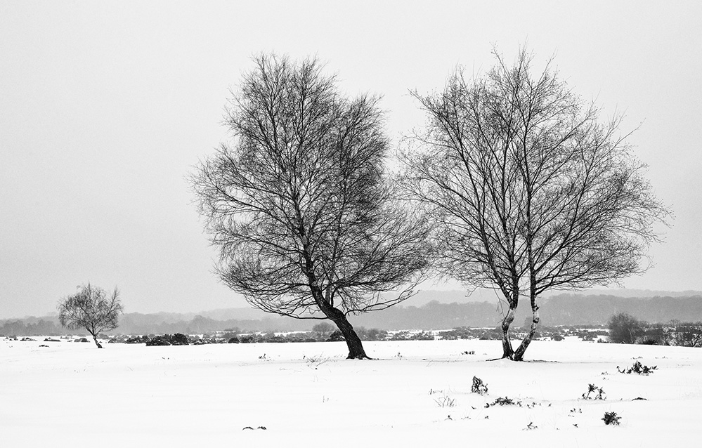 Winter Trees, West Wellow Common, New Forest 1