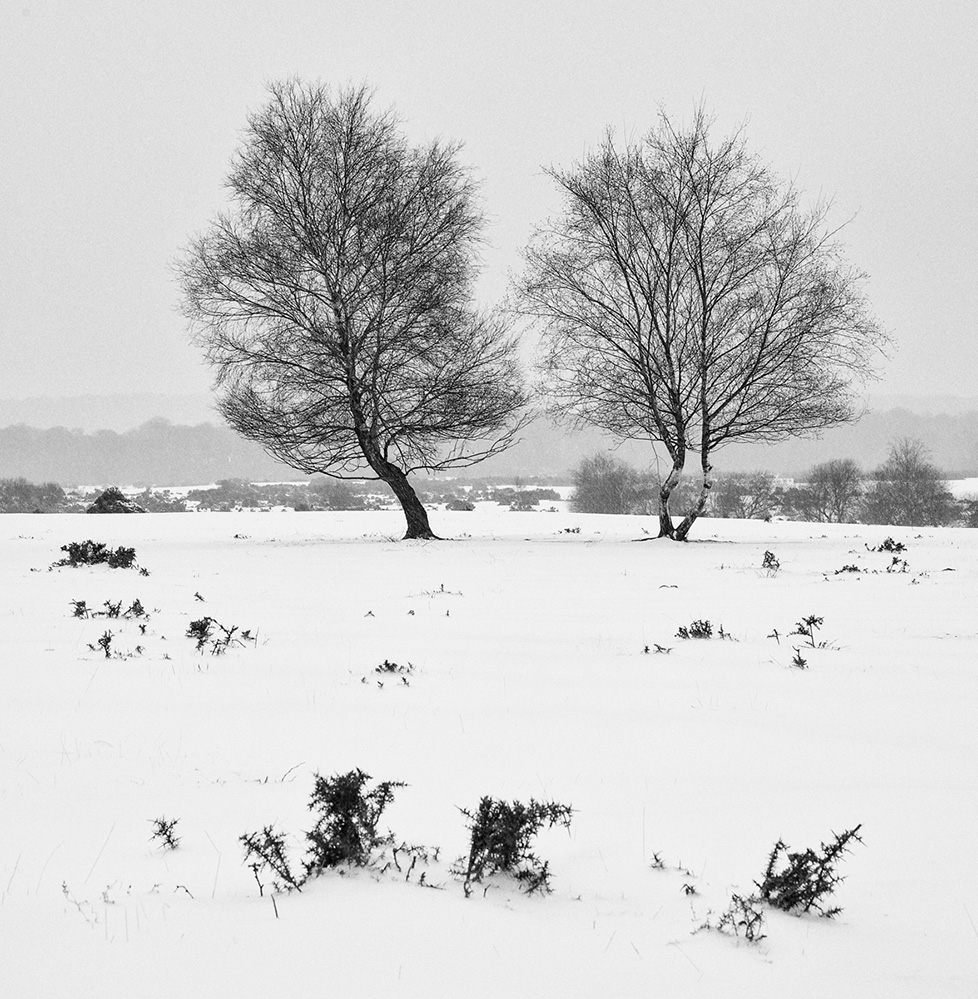 Winter Trees, West Wellow Common, New Forest 2