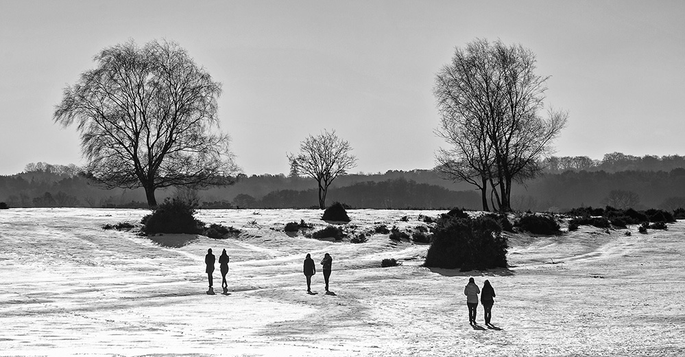 Winter Walkers, West Wellow Common, New Forest