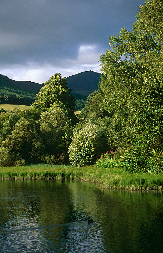 Pond of the Sedges, Pitlochry