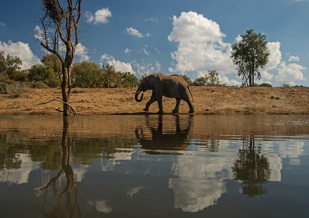 Madikwe Game Reserve Elephant Walk 1