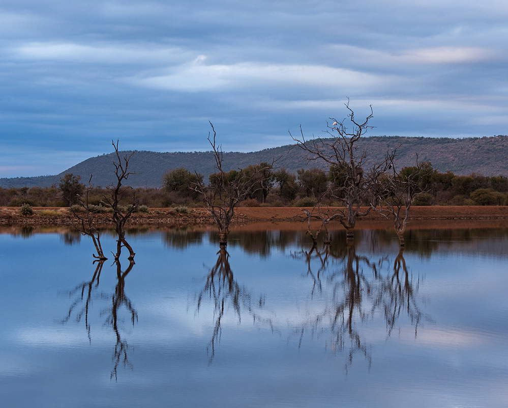 Madikwe Game Reserve Morning Reflections