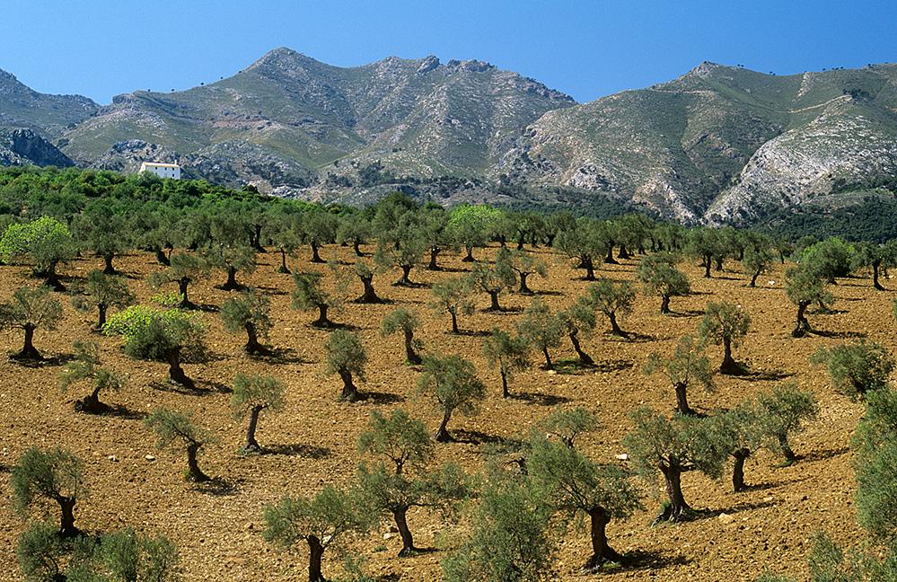 Landscape, near Ronda, Andalucia