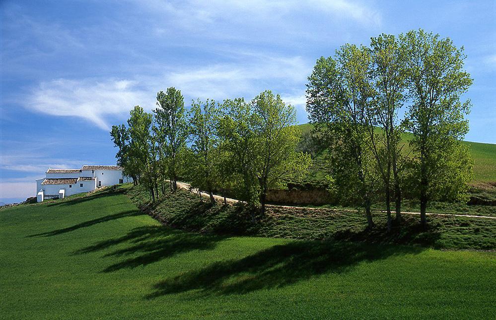Trees and Shadows, near Ronda, Andalucia