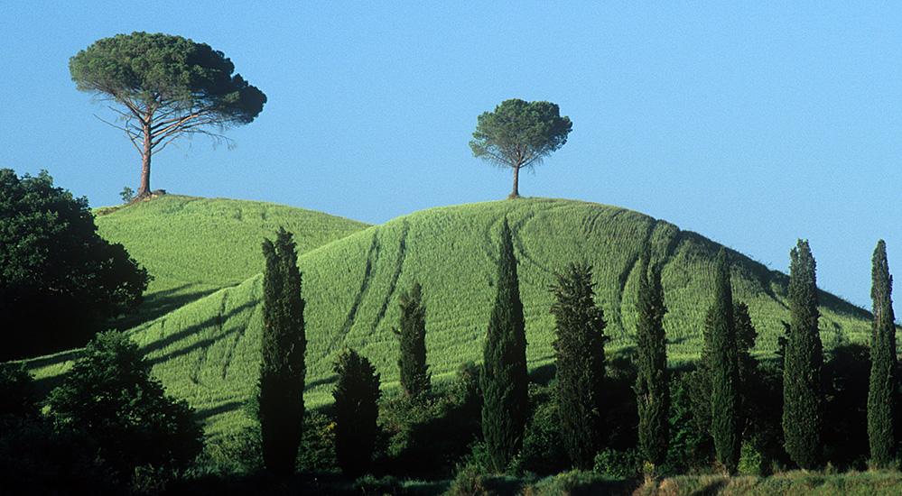 Cypress Trees, near Bollano