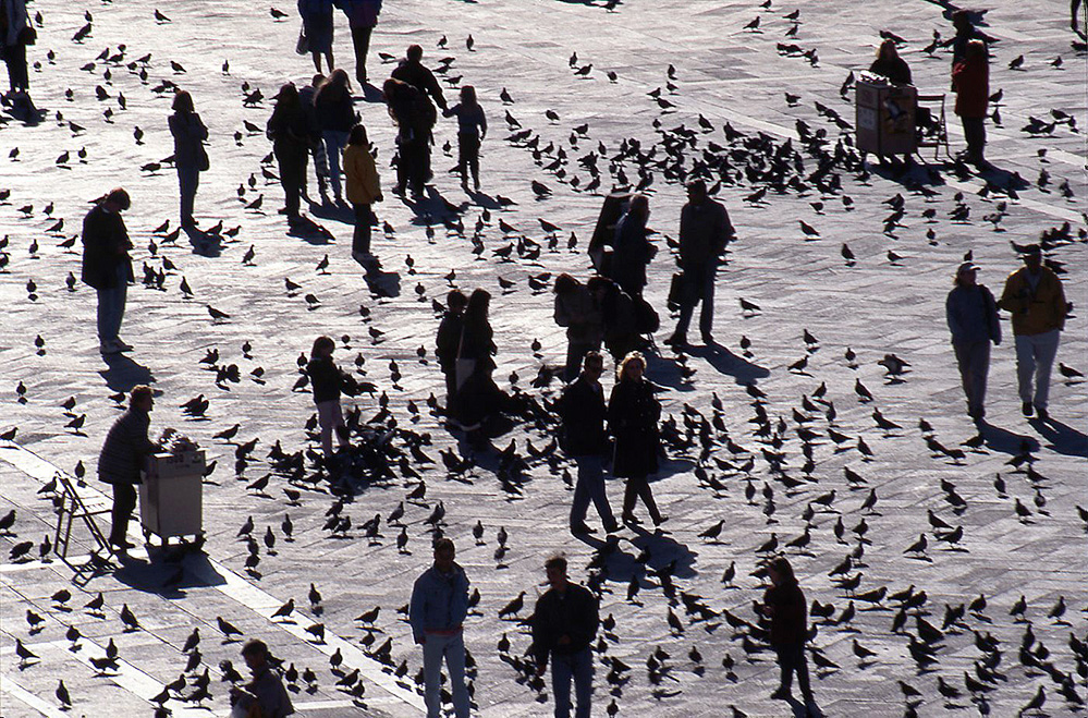 Figures and Pigeons in Piazza San Marco
