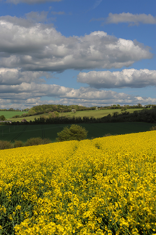 Spring Landscape, Downton 2