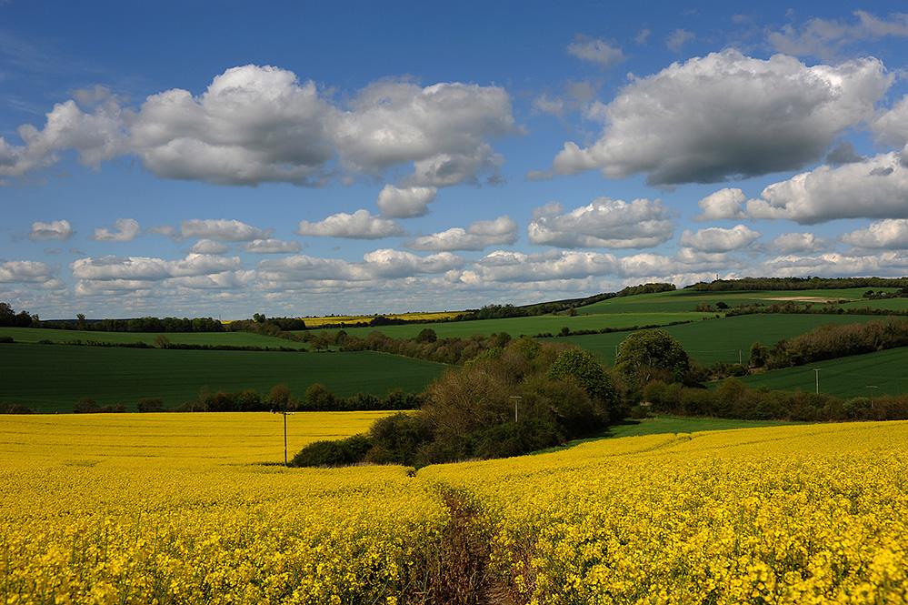 Spring Landscape, Downton 3
